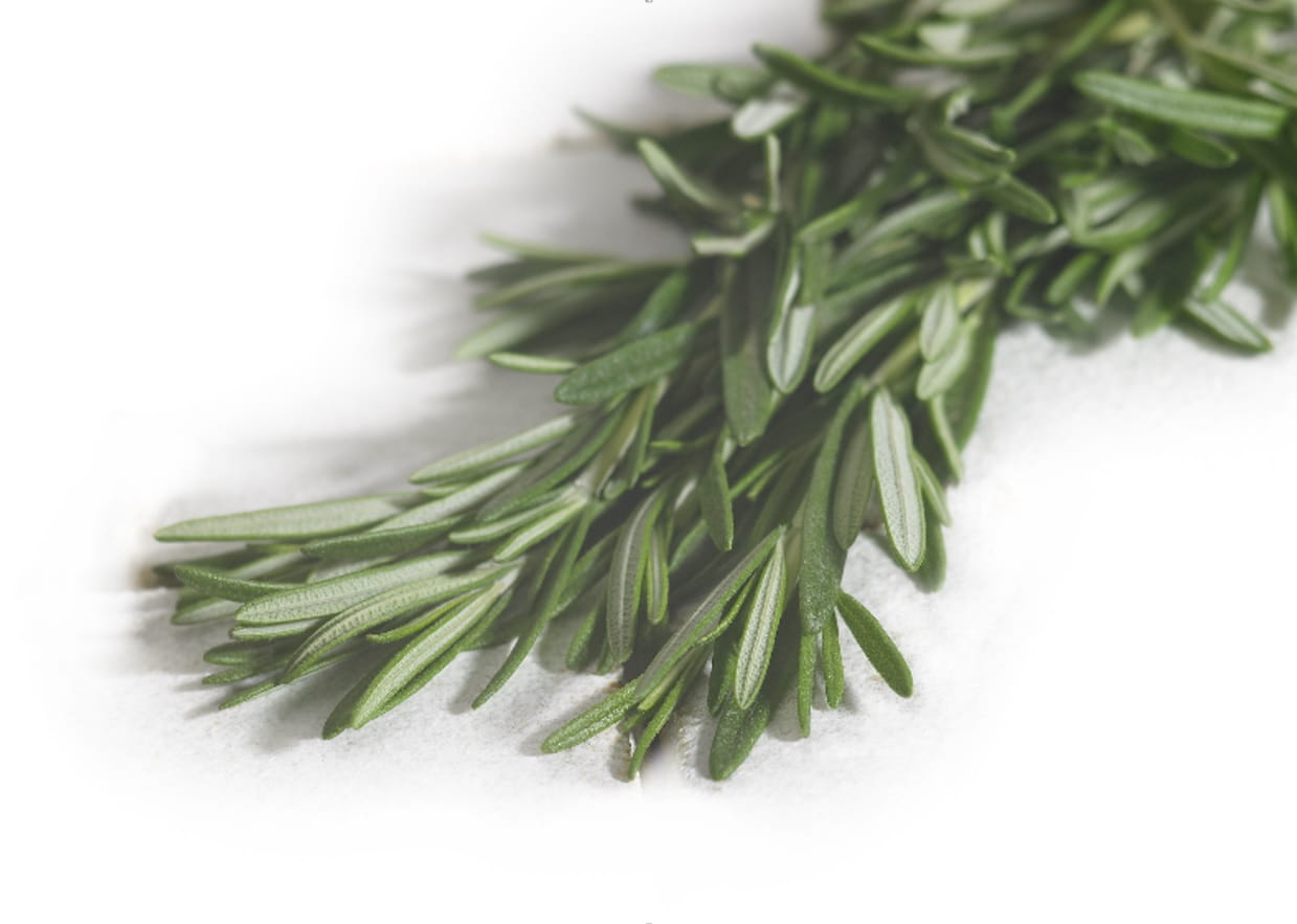 MSI Funded Study on Rosemary and Cognitive Function
